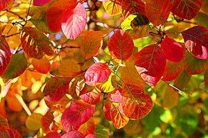 autumn in timaru